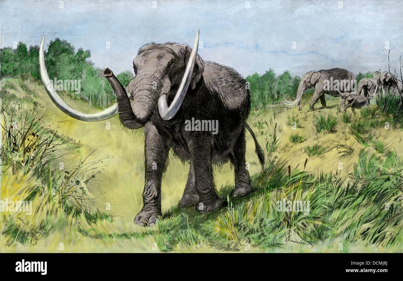 Die mastodone Roaming die Insel Manhattan im Quartär Alter. Handcolorierte halftone einer Abbildung Stockbild