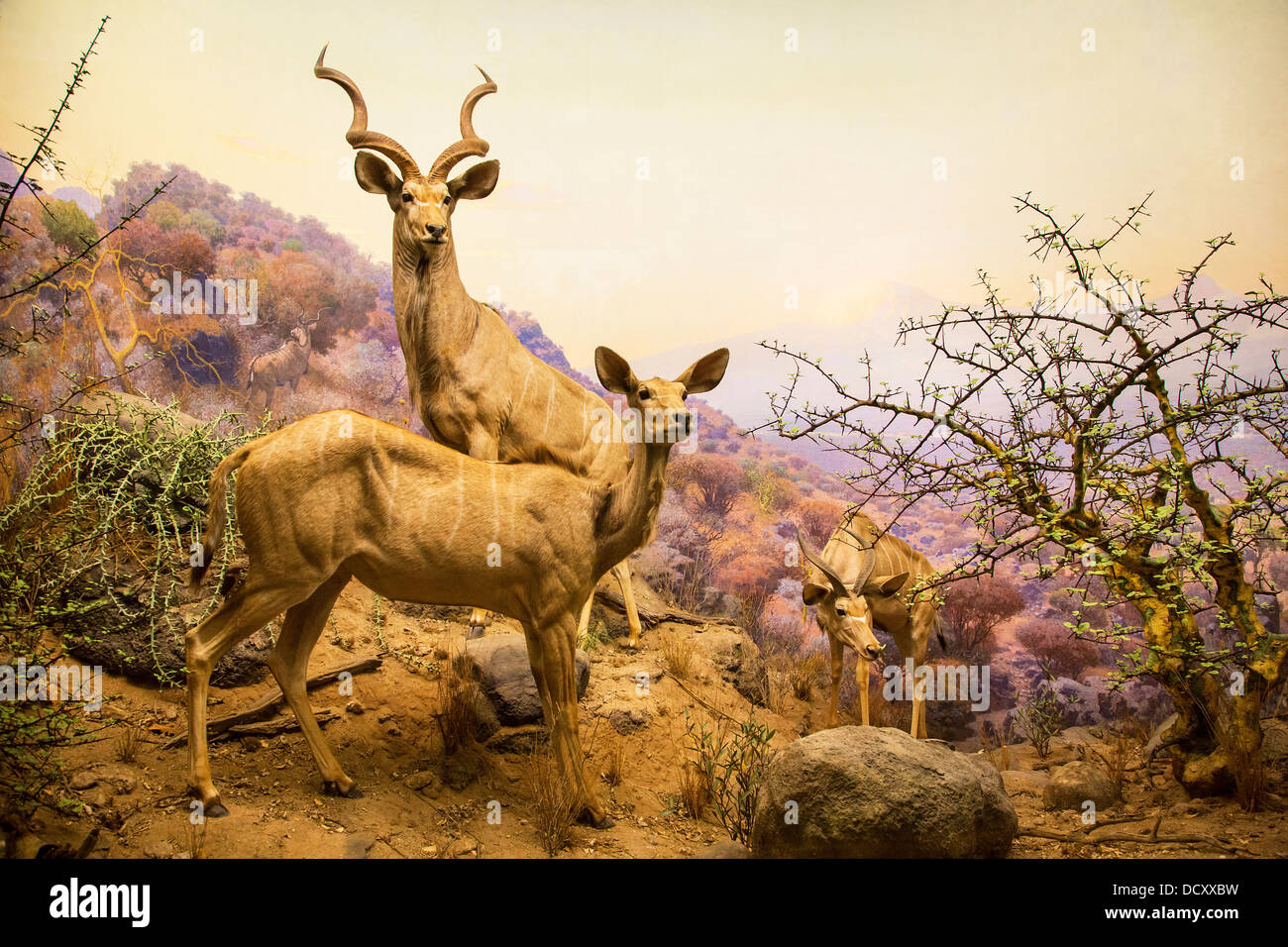 New York, Museum Of Natural History Stockbild