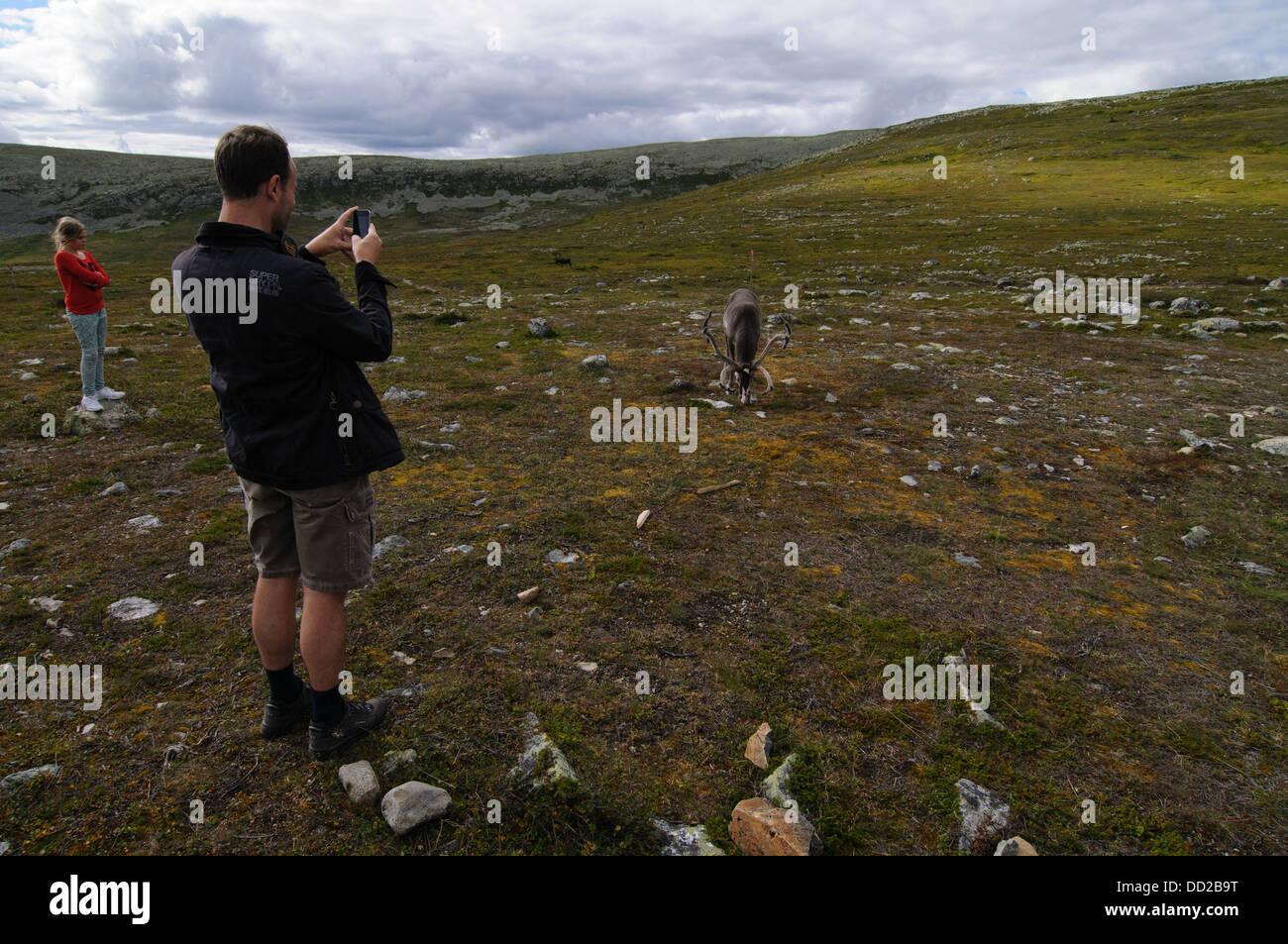 Touristen fotografieren mit einem Mobiltelefon von Rentieren in Schwedisch-Lappland Stockbild
