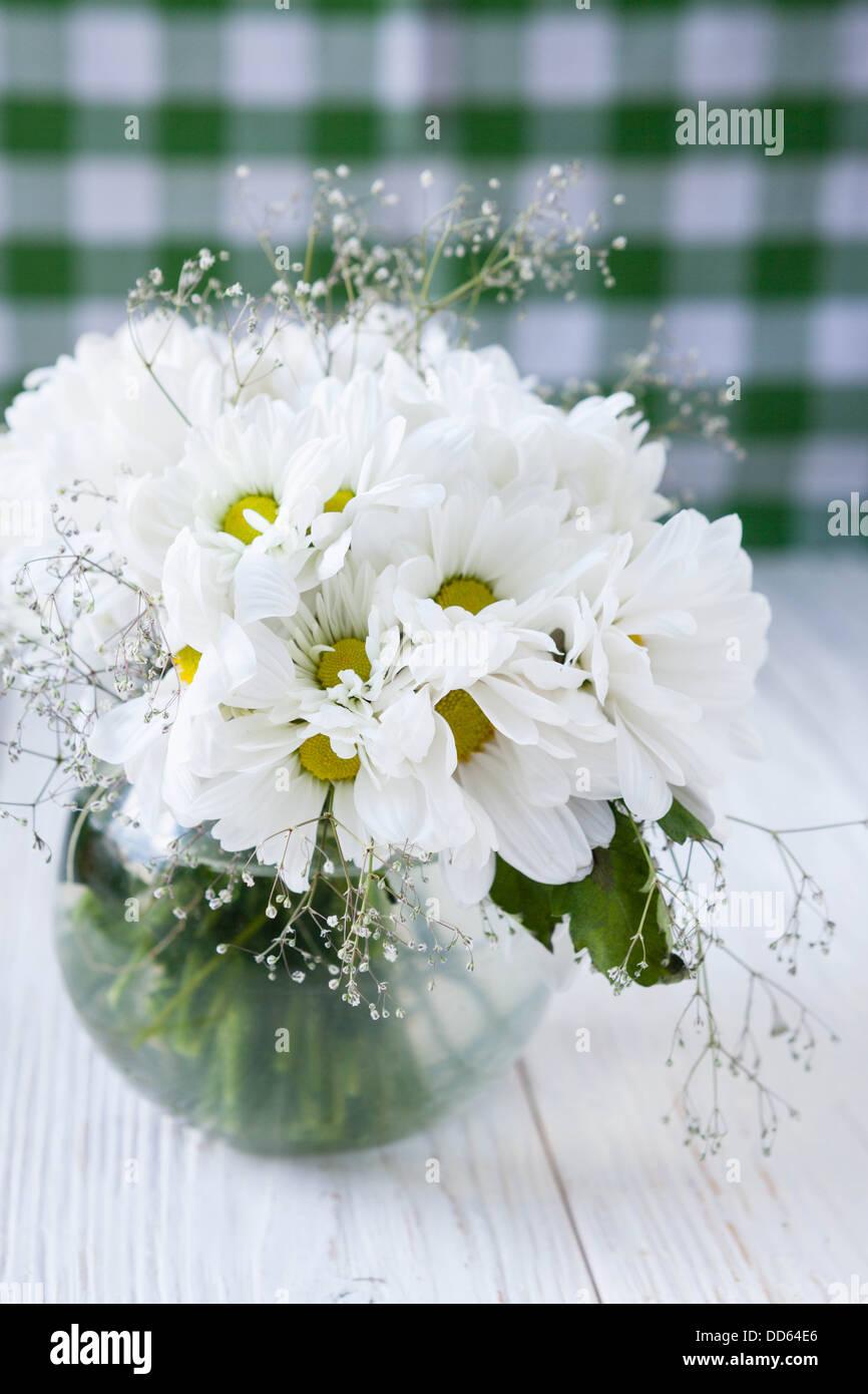 white flower chrysanthemum stockfotos white flower chrysanthemum bilder seite 3 alamy. Black Bedroom Furniture Sets. Home Design Ideas