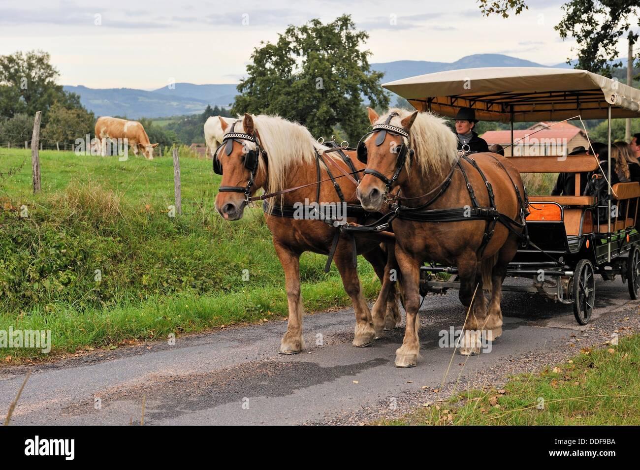 Schlendern Sie mit einer Pferdekutsche, Pre Fleuri Farm, Sermentizon, regionaler Naturpark Livradois Forez, Puy Stockbild