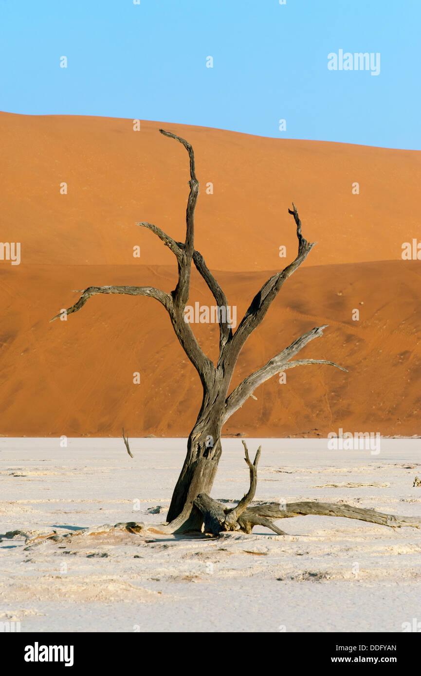 Dead Vlei am Sossusvlei Landschaft mit Toten Akazien und roten Sand Dünen Namib Naukluft Park, Namibia Stockbild