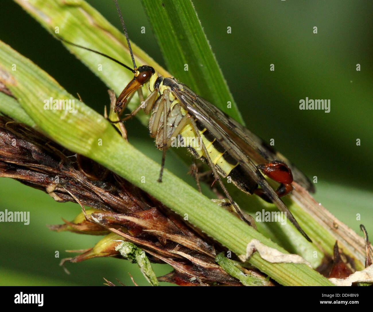 Flirten mit einem skorpion mann
