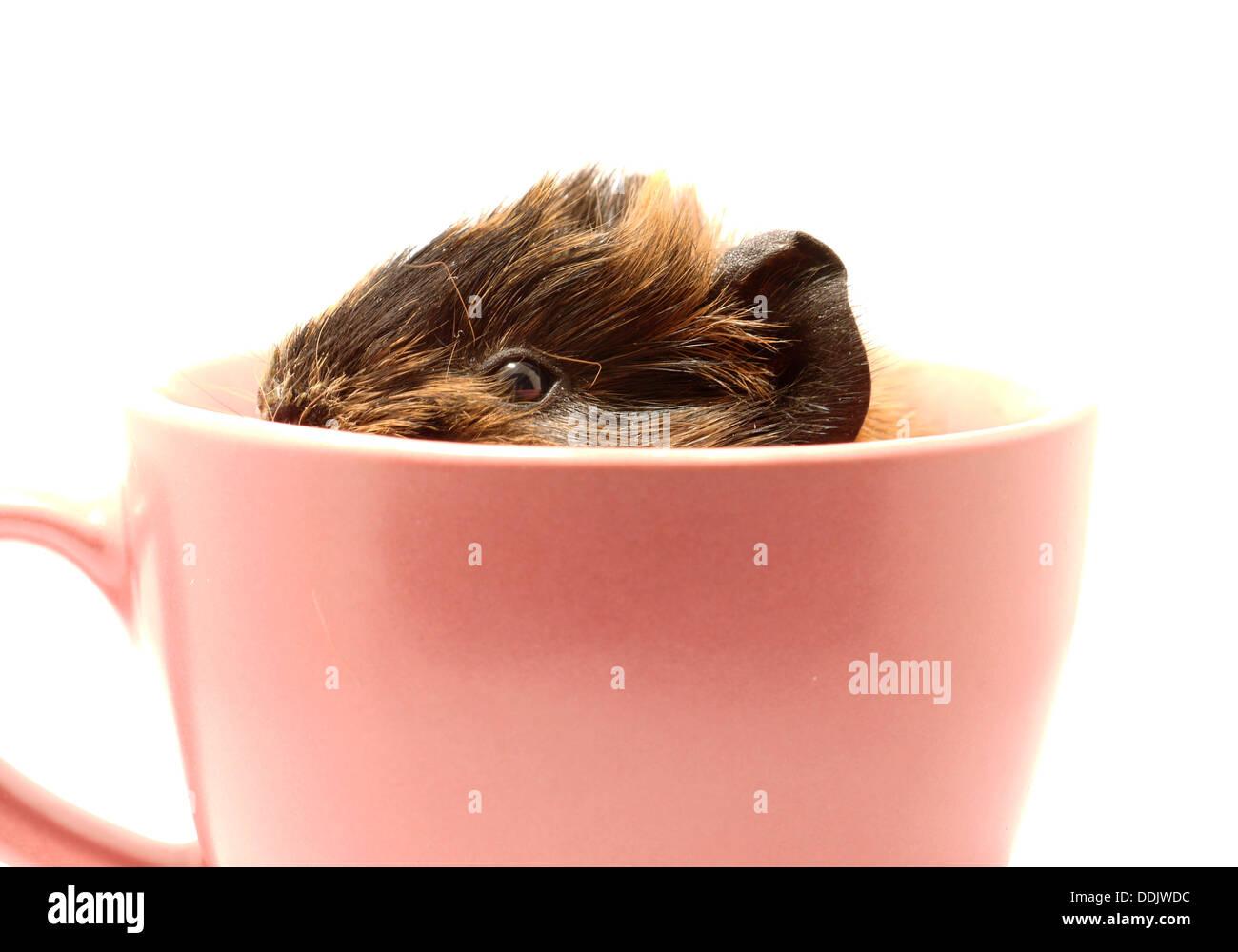 Hamster Funny Stockfotos & Hamster Funny Bilder - Seite 22 - Alamy
