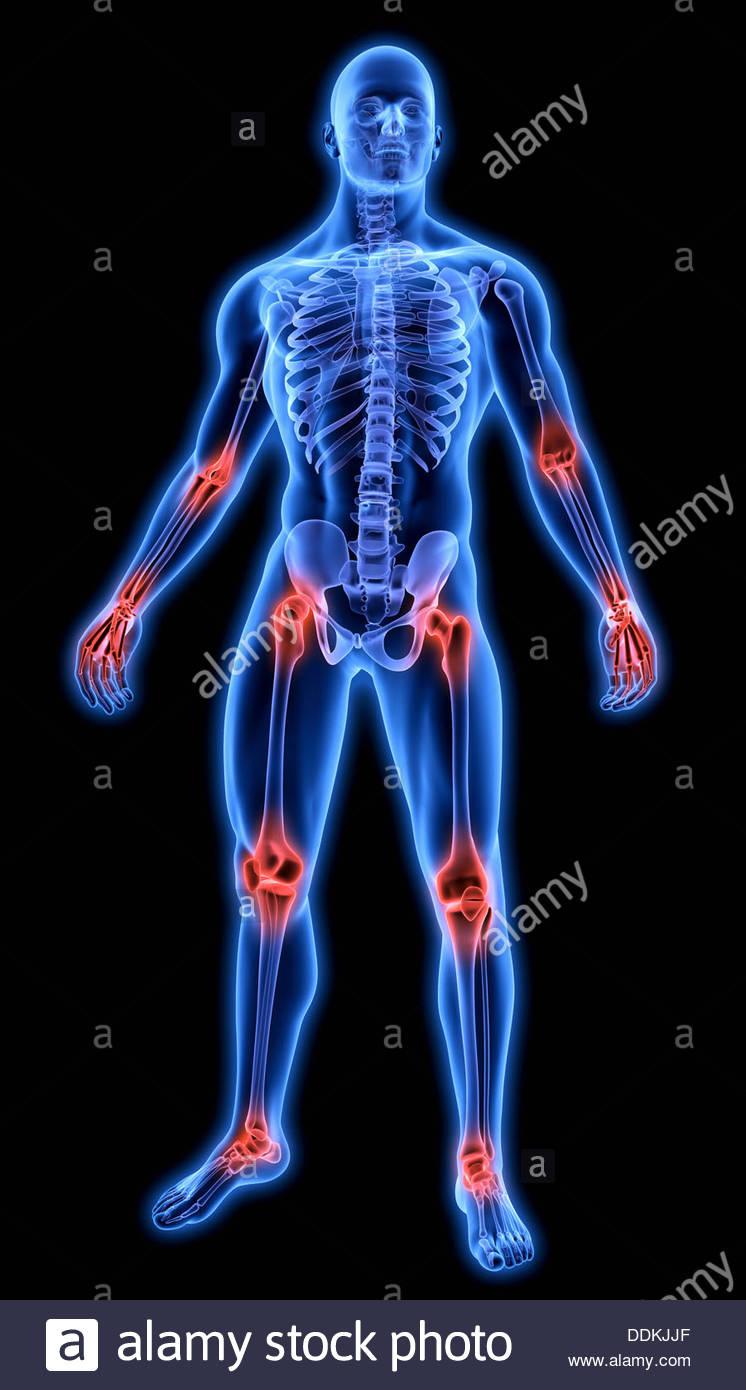 Beleuchtete menschliche Gelenke in blauen anatomisches Modell ...