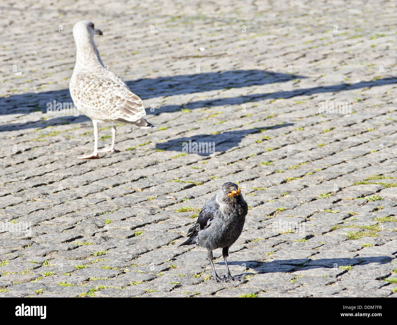 Schmutzige Stadt Vögel Stockbild