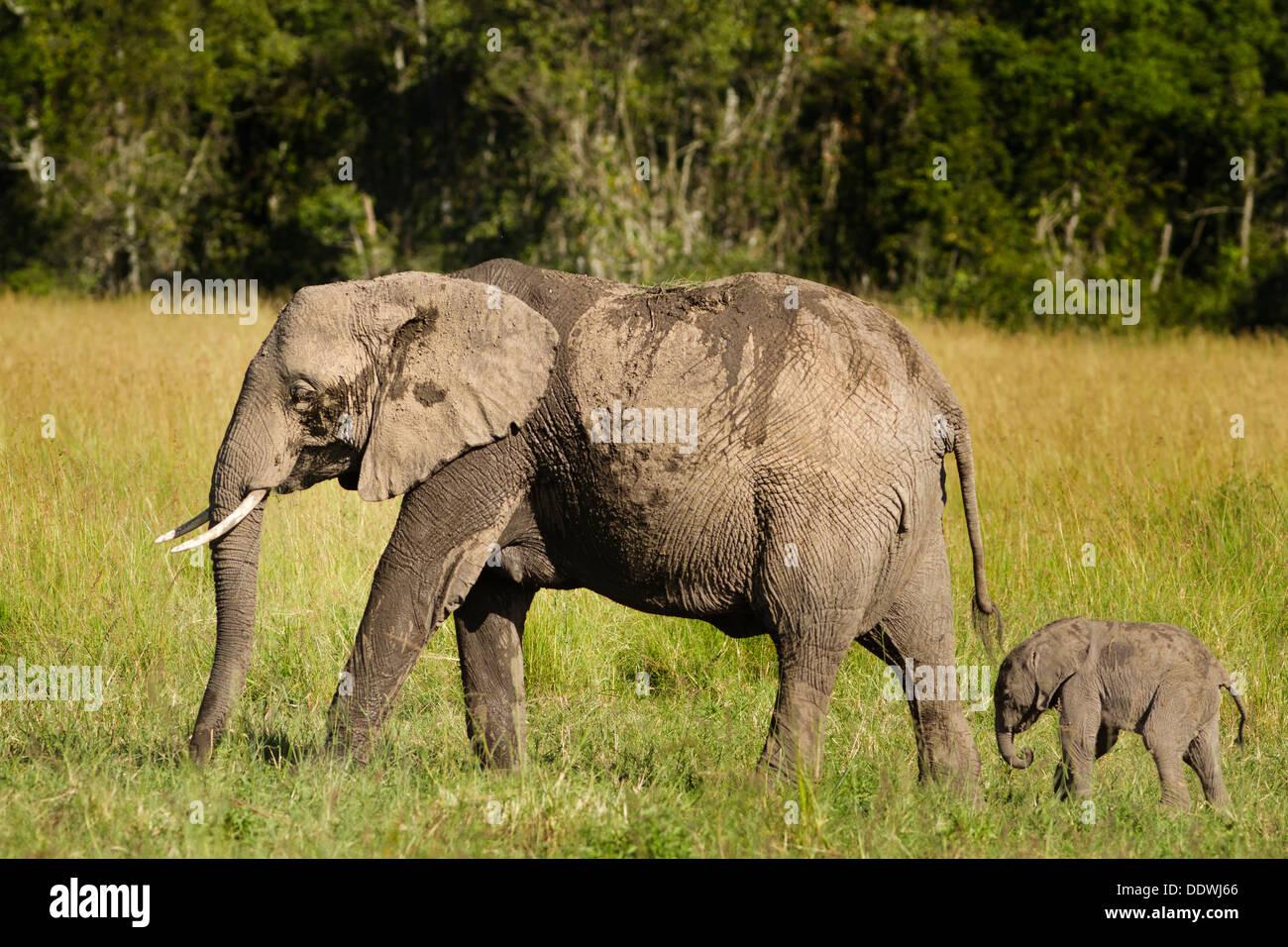Tolle Elefant Farbseite Bilder - Druckbare Malvorlagen - amaichi.info