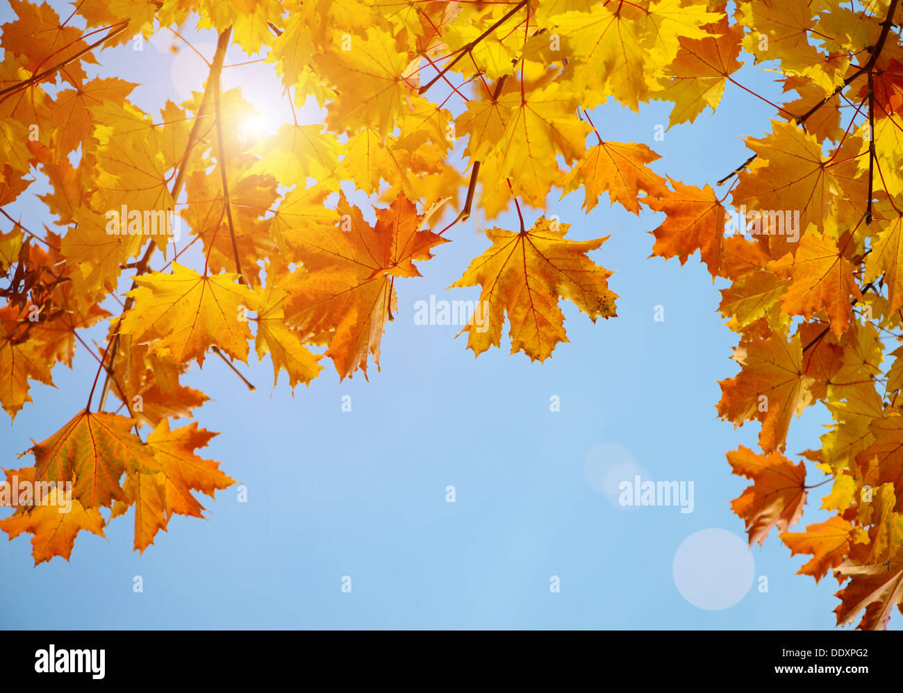 Herbstliche Ahornblätter Niederlassung über blauen Himmel Stockbild