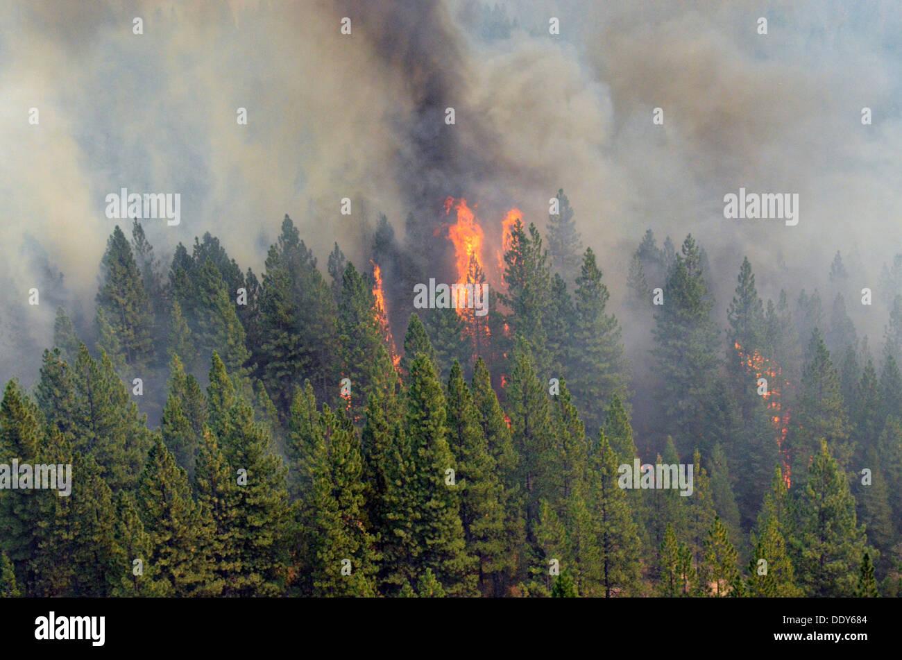 Flammen und Rauch aus dem Rim-Feuer weiter Wald 29. August 2013 in der Nähe von Yosemite, CA brennt. Stockbild