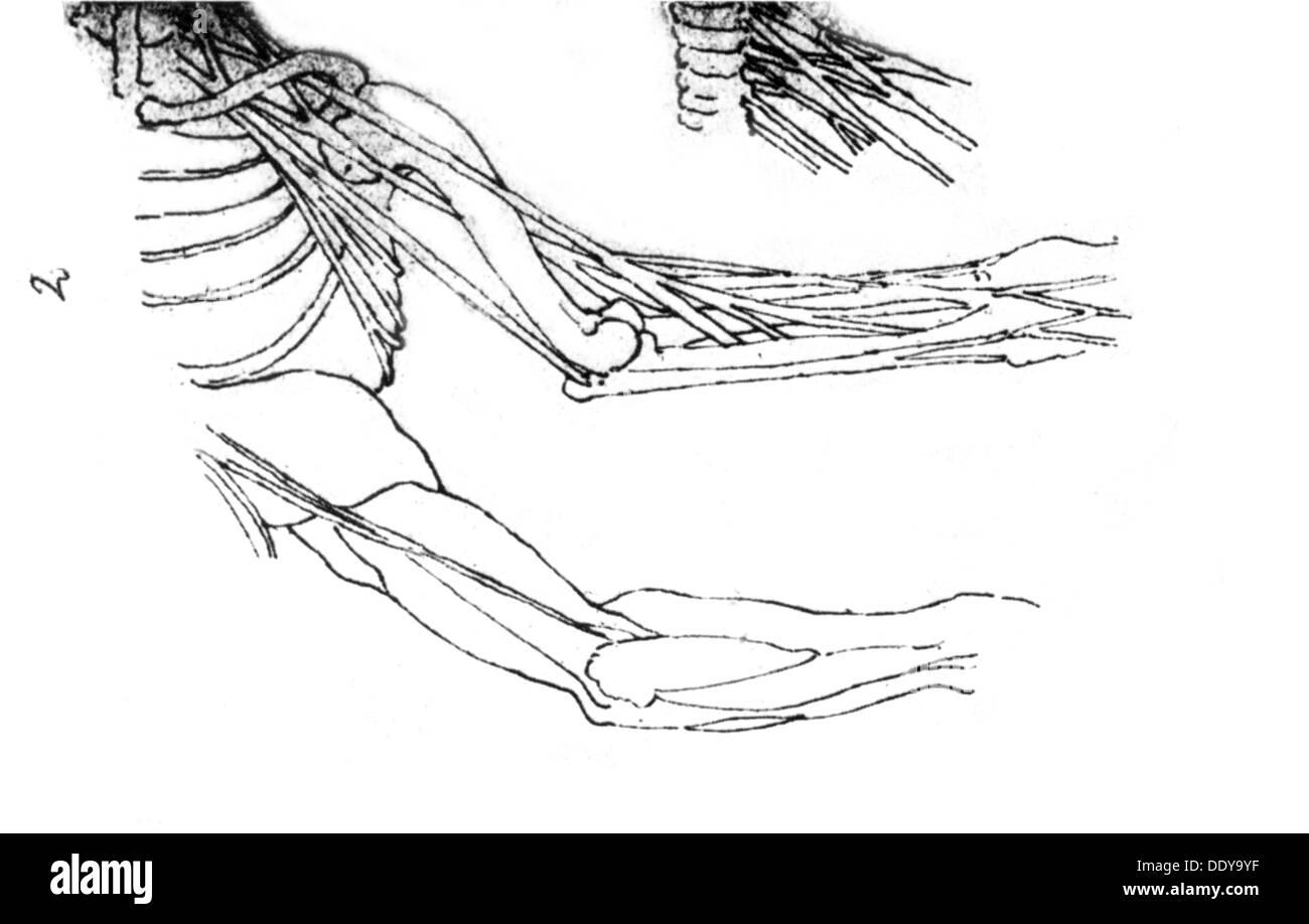 Niedlich Skizze Der Menschlichen Anatomie Ideen - Anatomie Ideen ...