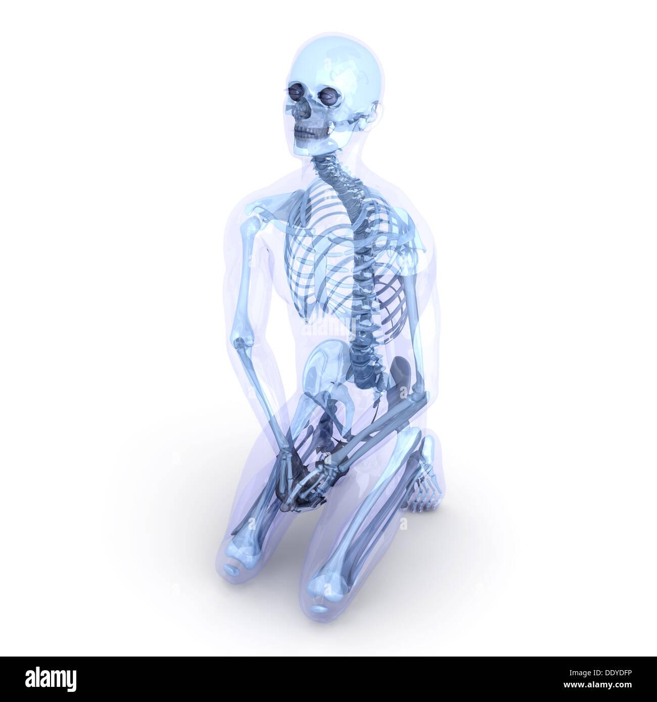 Wunderbar Sichtbare Körper 3d Menschliche Anatomie Galerie ...