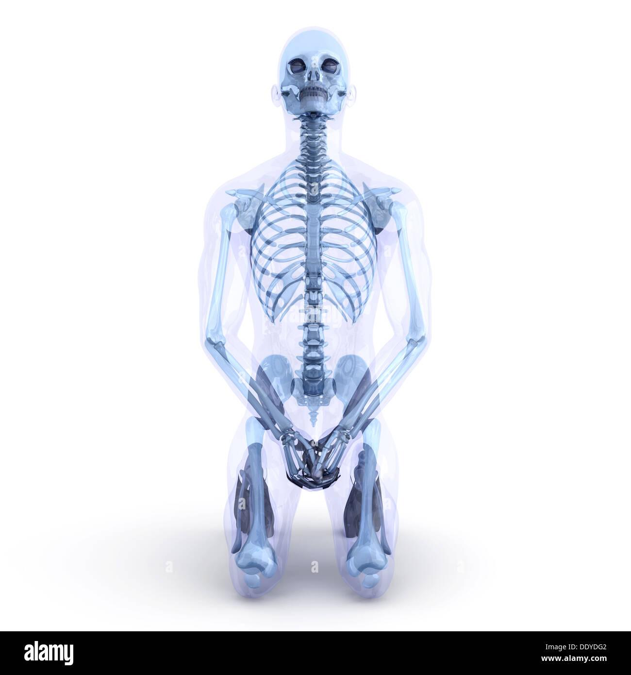 Fantastisch 3d Atlas Der Menschlichen Anatomie Fotos - Anatomie ...