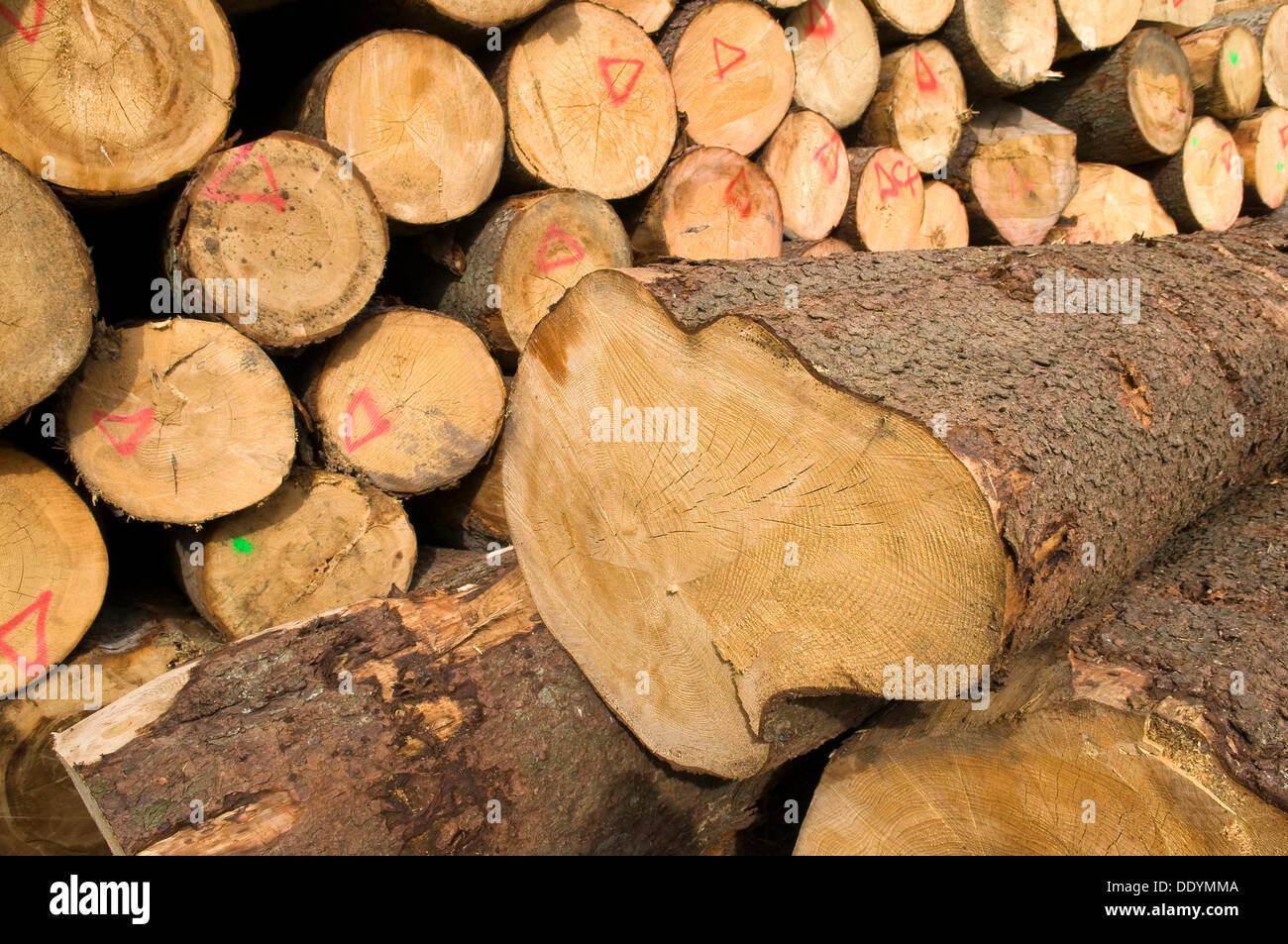 Sägewerk Holzhandel Protokolle Holzlagerung Bauholz Vorarlberg