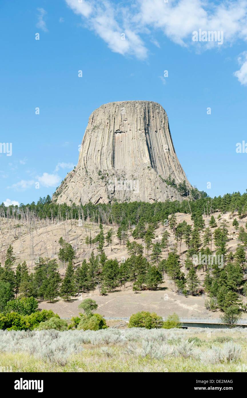 Monolith, Sphäruliten Vulkangestein, Basalt, leichte Ponderosa-Kiefern-Wälder (Pinus Ponderosa), Devils Tower National Monument Stockbild