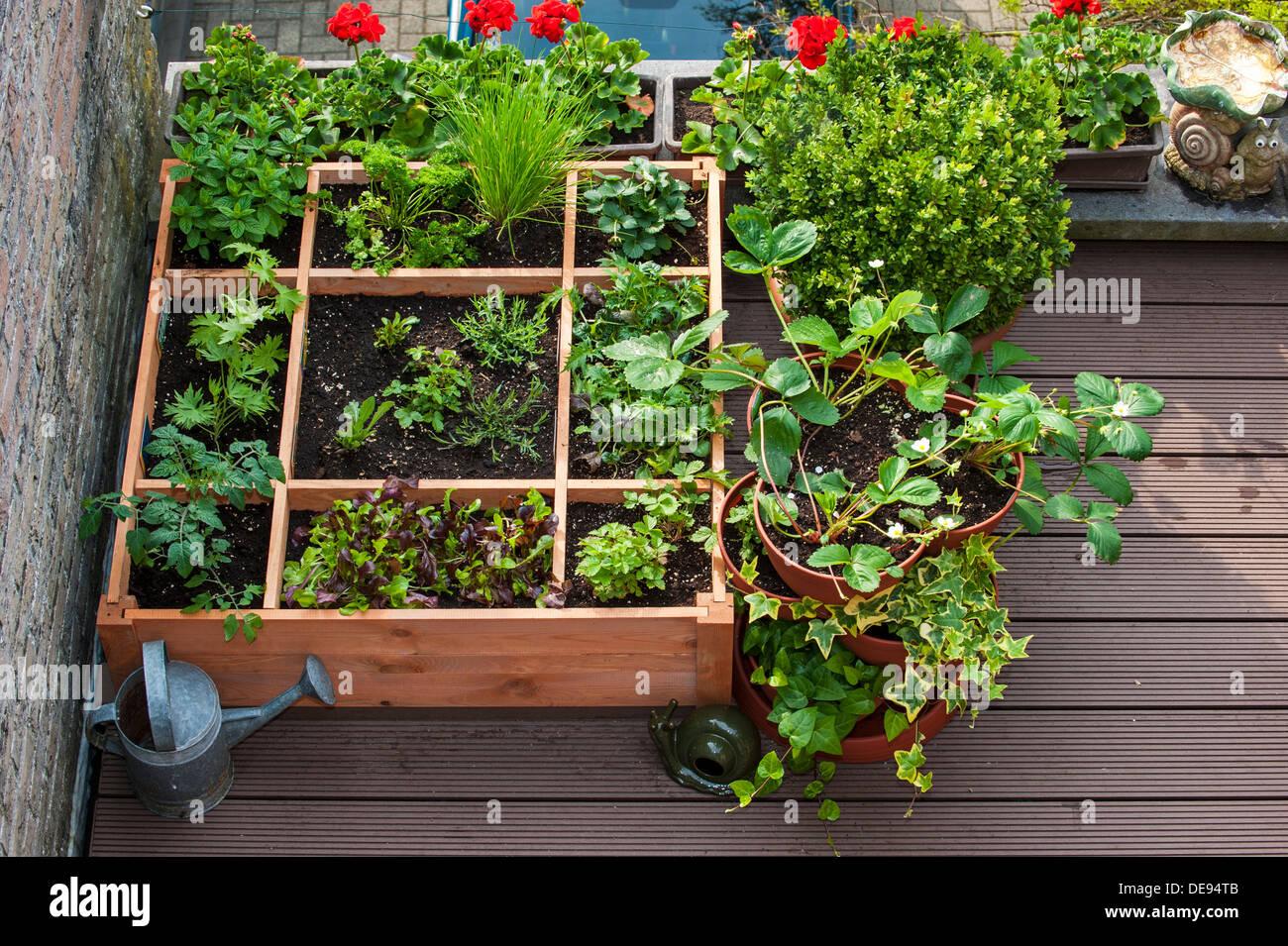 Quadratfuß Gartenarbeit durch das Einpflanzen von Blumen, Kräutern und Gemüse in Holzkiste auf Balkon Stockbild