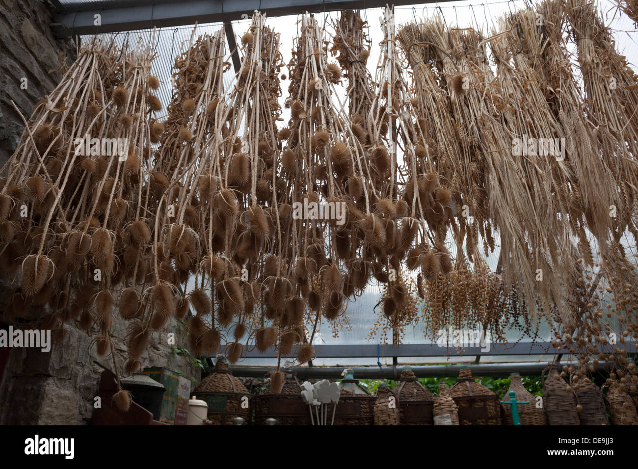 Pflanzen Trocknen kräuter und pflanzen zum trocknen in papingo griechenland