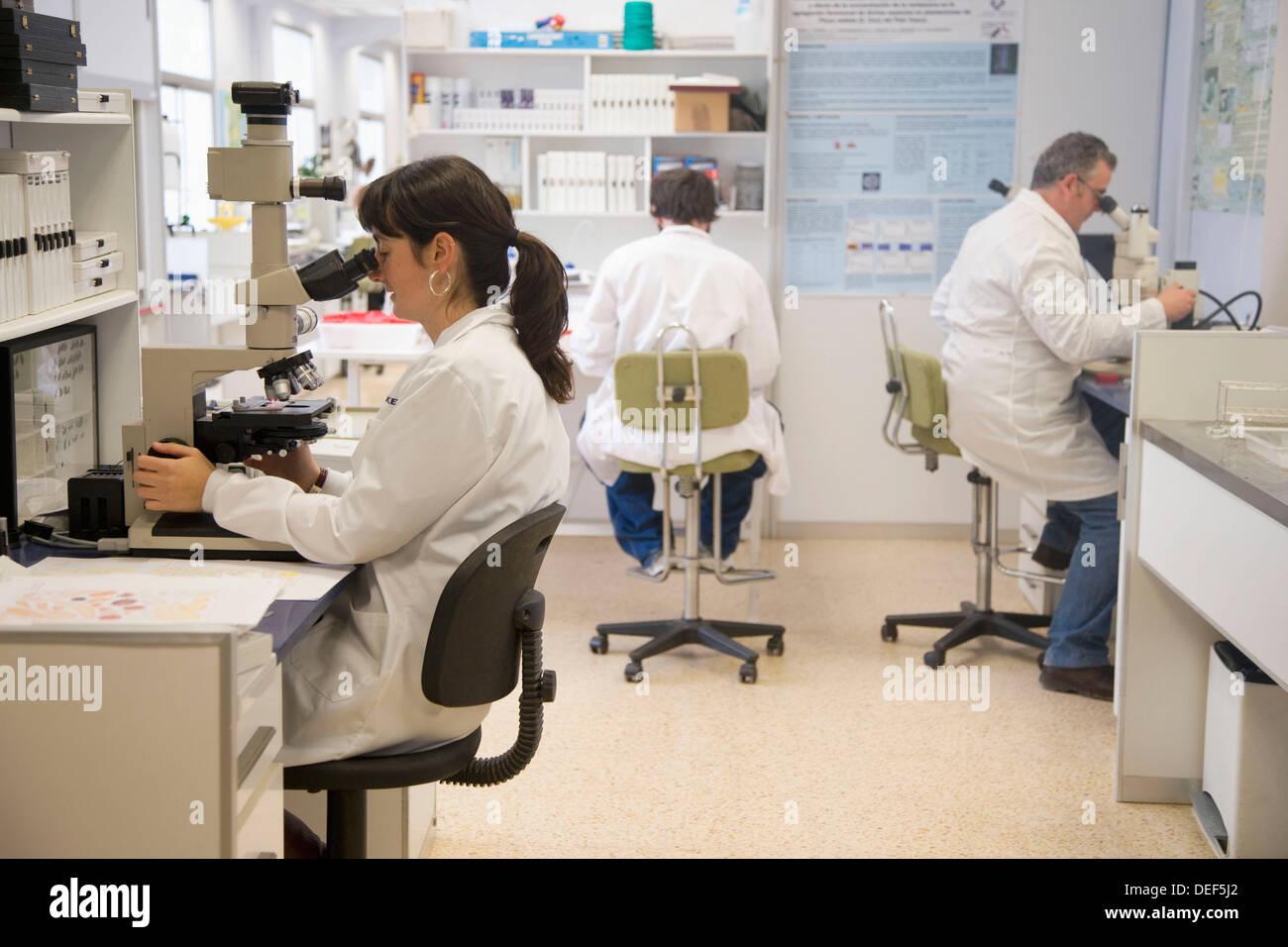 Mikroskop Beobachtung, Entomologie-Labor, Neiker Tecnalia, Instituto de Investigación y Desarrollo Agrario Ganadero, Stockfoto