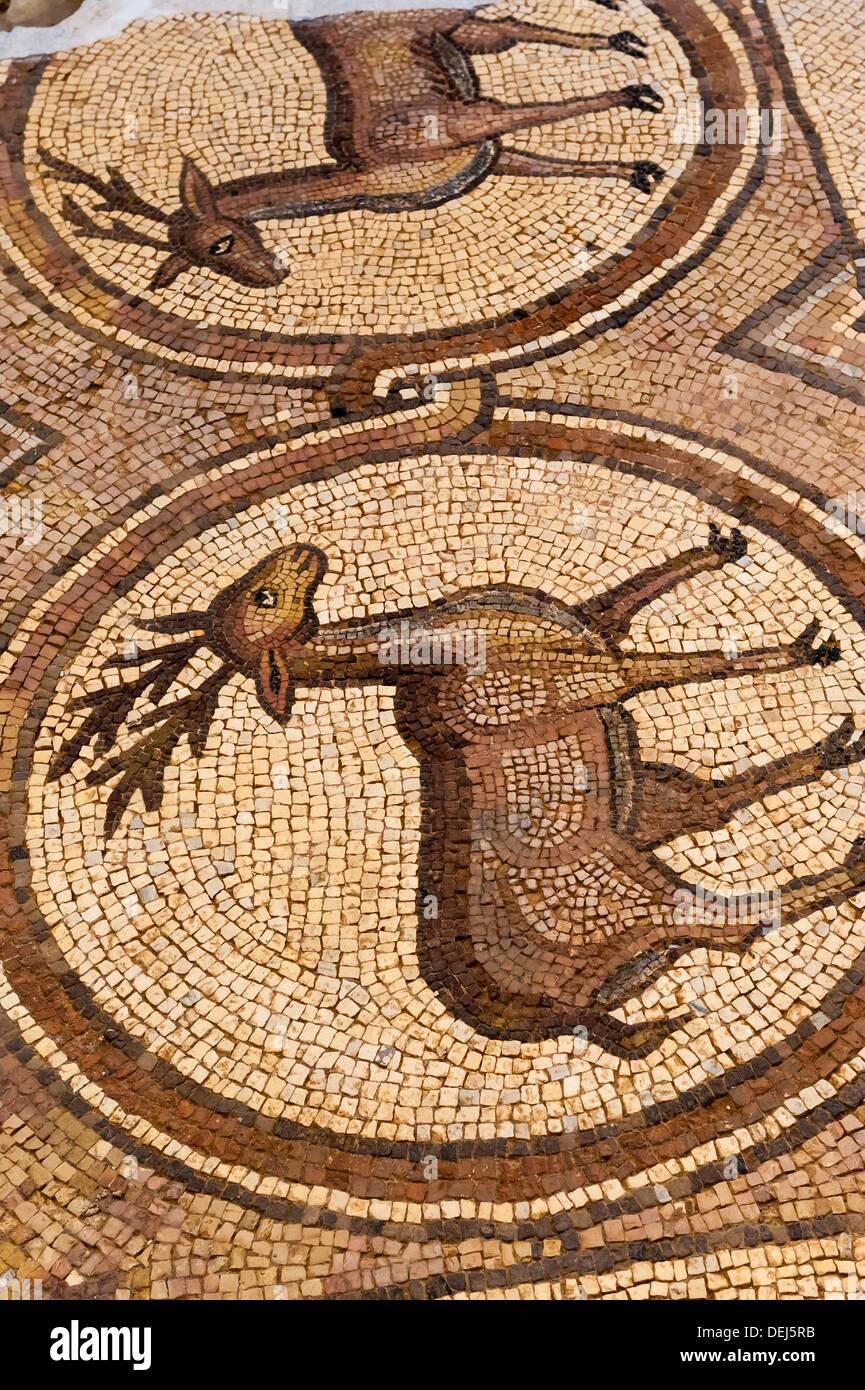 Mosaik Fliesen Große Tempel Petra Archäologischen Park Petra - Mosaik fliesen größe