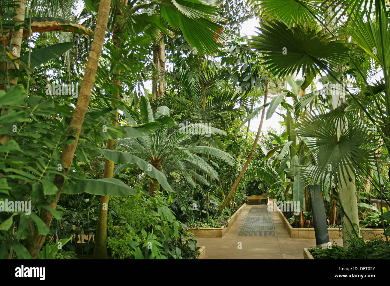 palmen im gew chshaus in den royal botanic gardens kew in. Black Bedroom Furniture Sets. Home Design Ideas