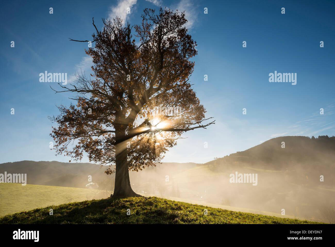 Oak Beams Stockfotos & Oak Beams Bilder - Seite 2 - Alamy