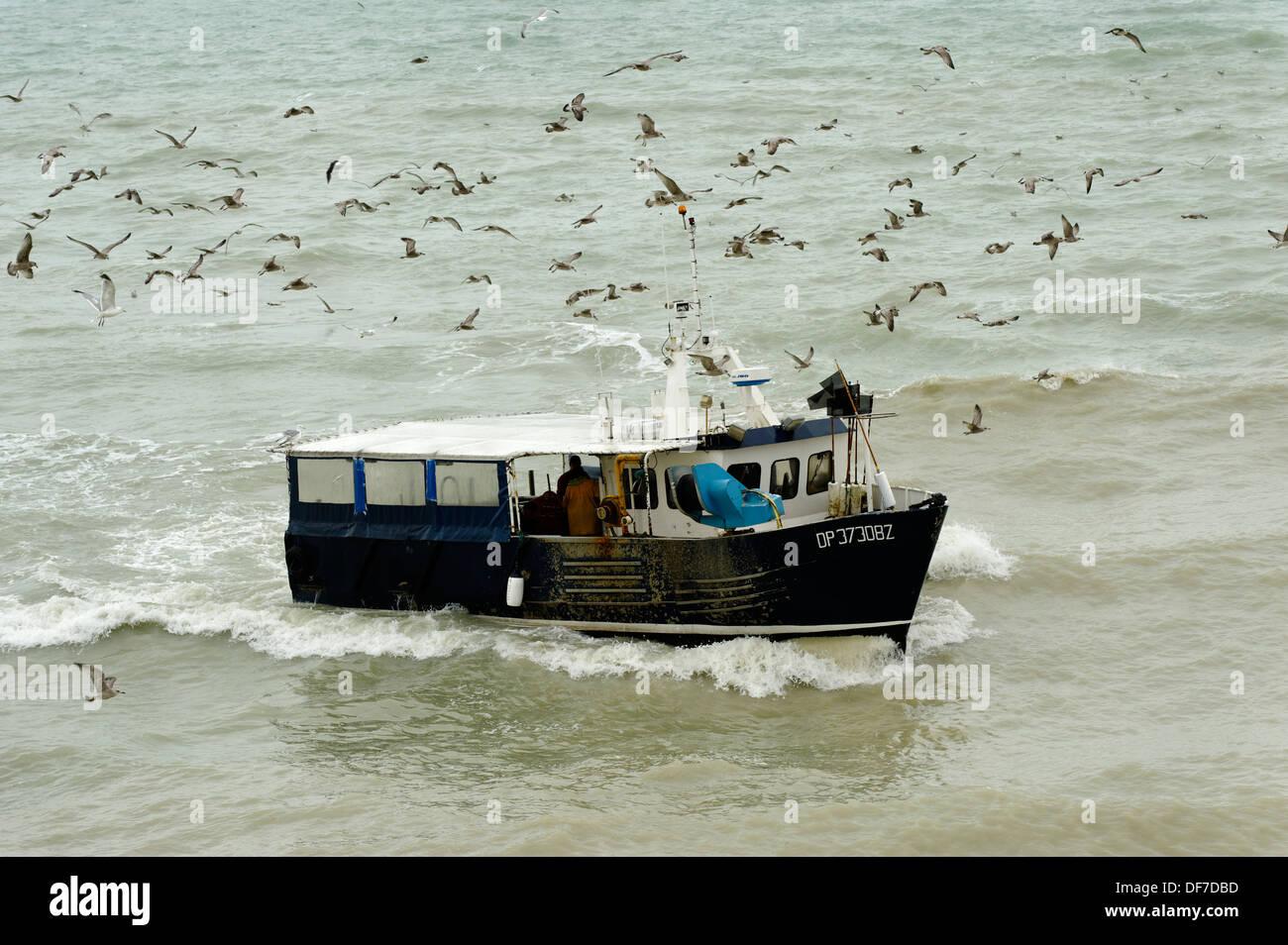 Möwen Schwärmen um ein Fischerboot, Le Tréport, Département Seine-Maritime, Haute-Normandie, Frankreich Stockbild