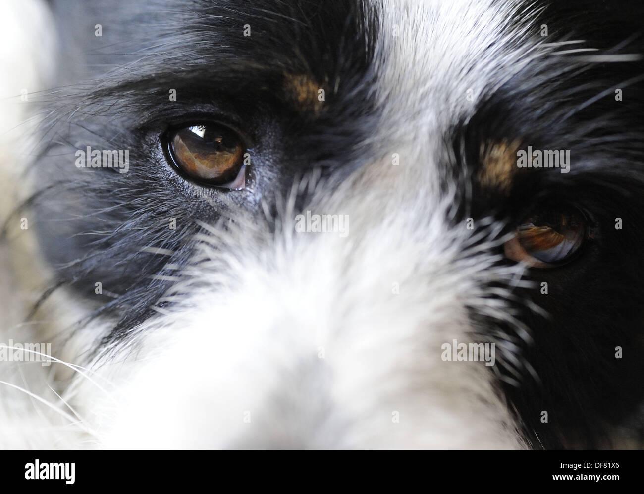 Terrier Mix Stockfotos & Terrier Mix Bilder - Alamy