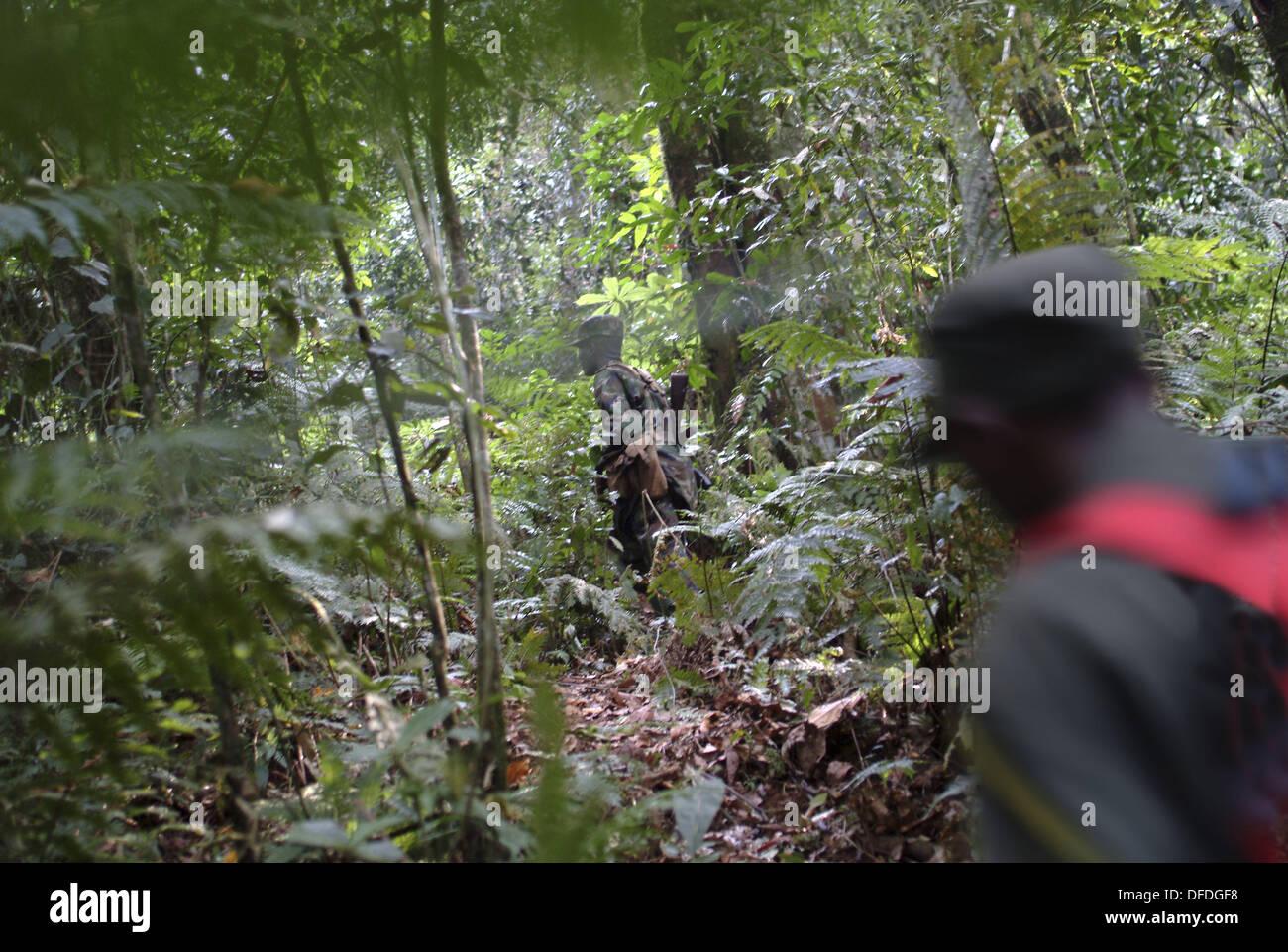 Gorilla-tracking in den Dschungel, Bwindi Impenetrable Forest, Uganda Stockbild