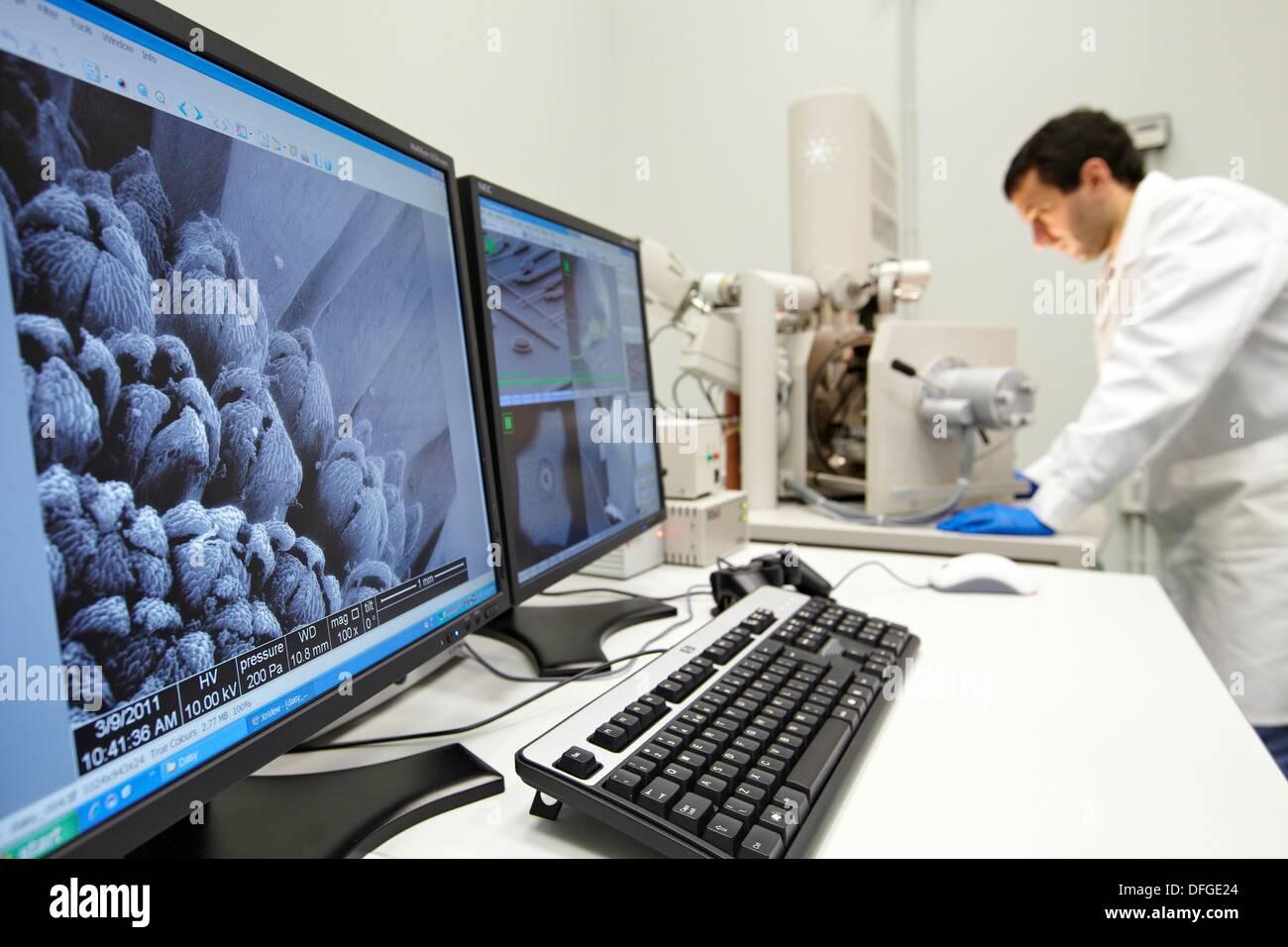 Diskutieren auf SEM Bilder, Analyse von Nanostrukturen und Nanosysteme, Environmental scanning Electron Microscopy Laboratory, Stockbild