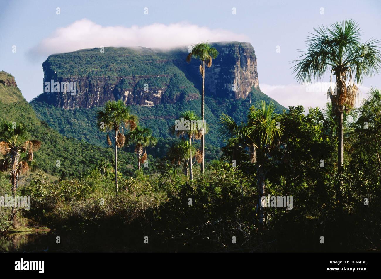 Kurun Tepui Berge Gran Sabana Canaima Nationalpark Venezuela