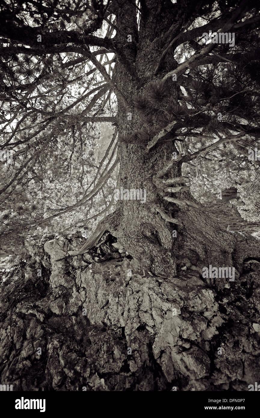 Baum detaillierte Stockbild