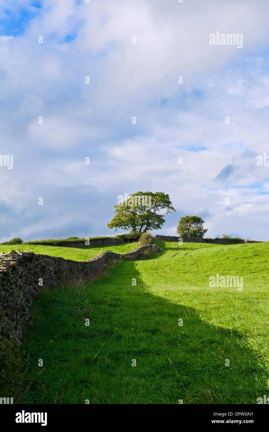 Eine Steinmauer klettern einen steilen Hügel mit Bäumen an der Spitze. Stockbild