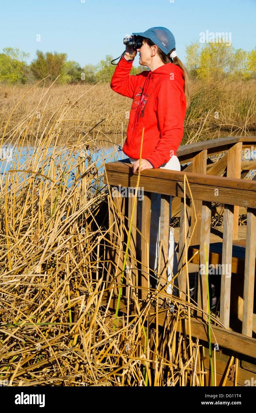 Slough Feuchtgebiete zu Fuß Promenade Beobachtung Deck, Cosumnes River Preserve, California verloren Stockbild
