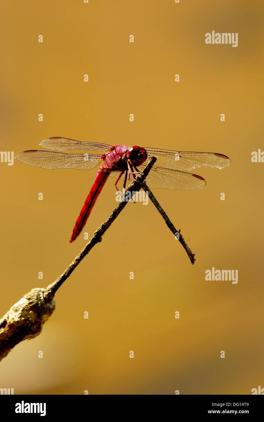 Charmant Libelle Färbung Seite Fotos - Druckbare Malvorlagen ...