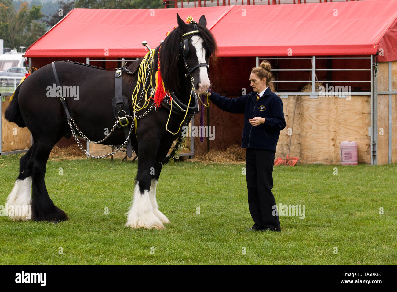Shire Horses Pulling Plough Stockfotos & Shire Horses Pulling Plough ...