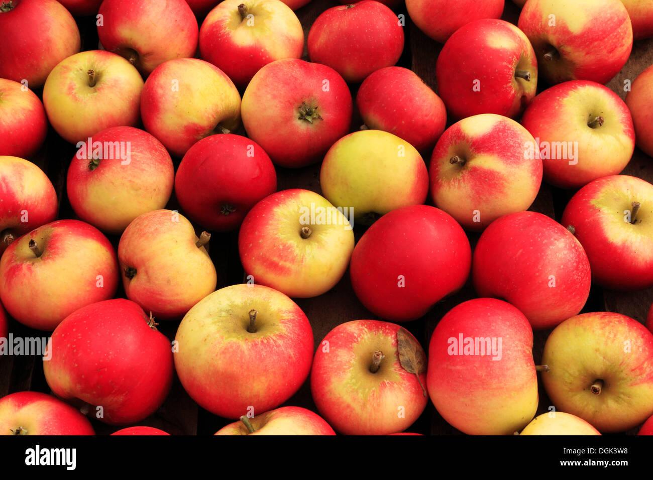 Apfel 'Entdeckung', Malus Domestica, anzeigen Äpfel verschiedene Sorten im Hofladen Stockbild