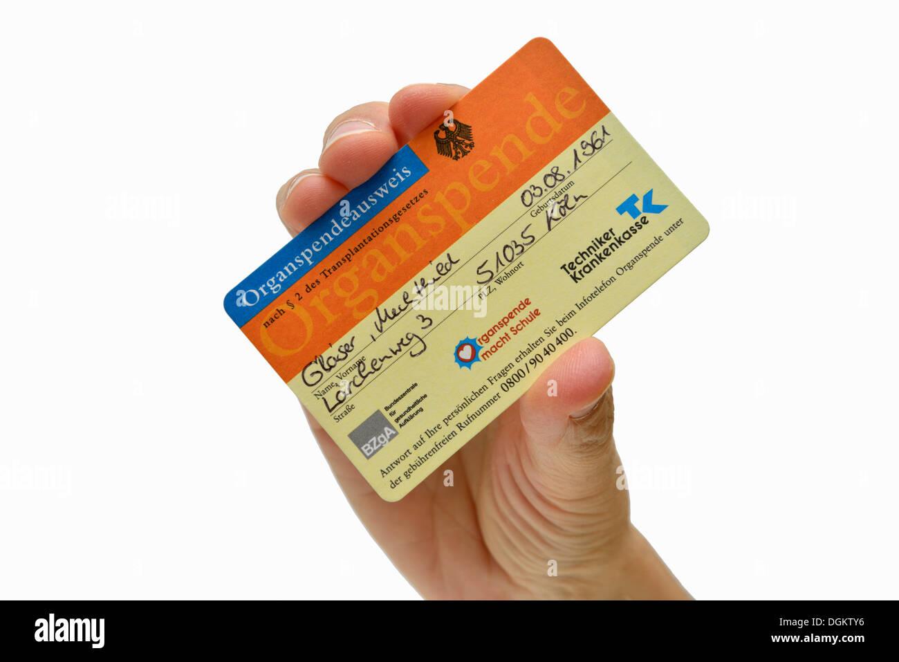 Hand, die einen ausgefüllten Organspendeausweis, fiktive Daten Stockbild