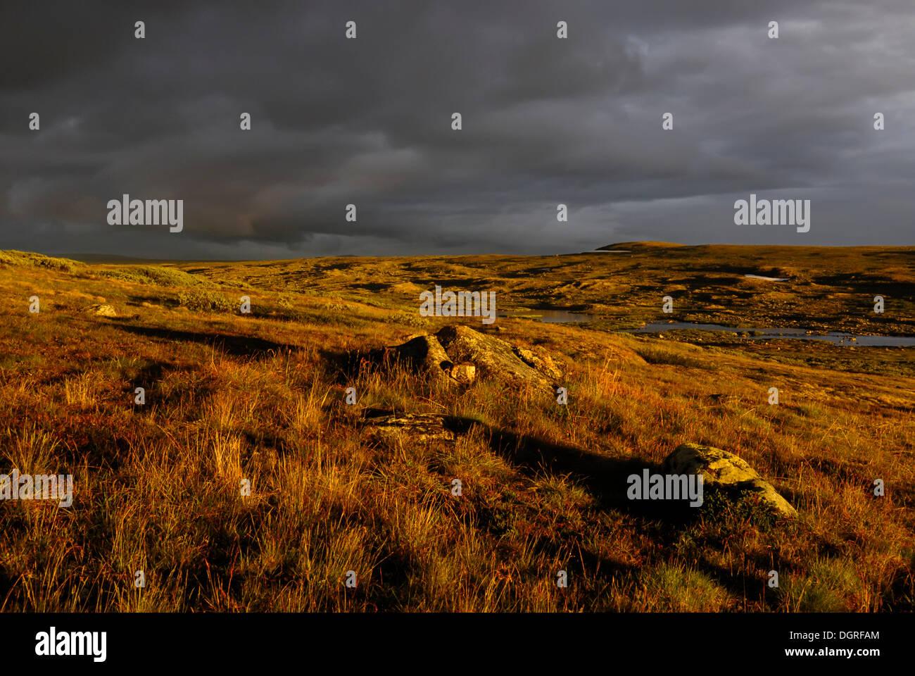 Abendlicht auf die hardangervidda, Hardanger vidda, plateaufjell und Europas größte Hochebene, Norwegen, Europa Stockbild
