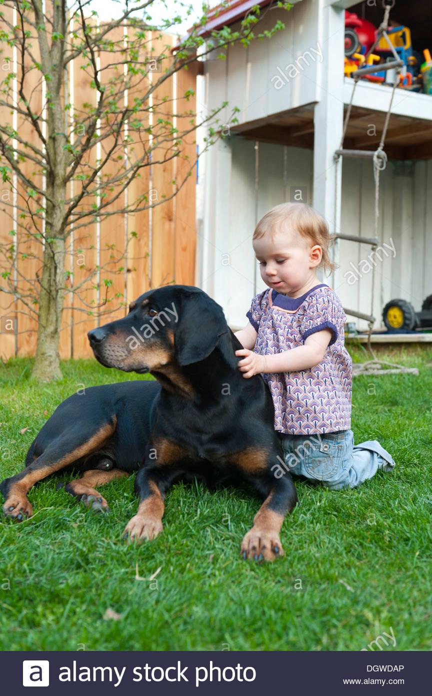 Kleinkind, Mädchen liebevoll streicheln einen großen Hund in einem Garten, Friedberg in der Nähe von Augsburg, Bayern Stockfoto
