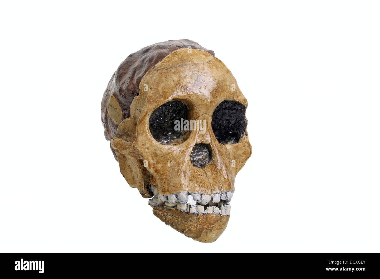 Baby Skull Stockfotos & Baby Skull Bilder - Alamy
