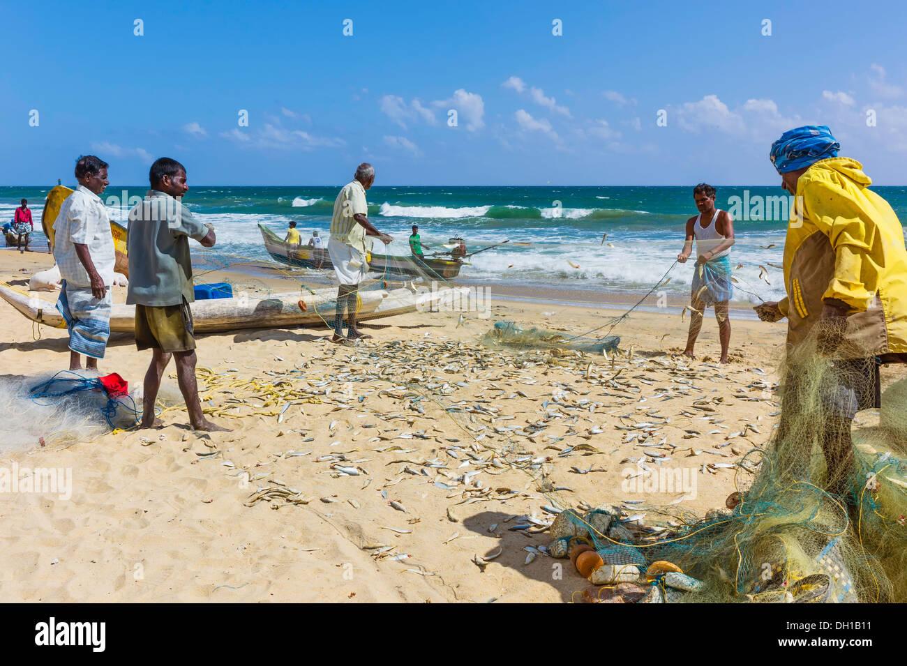 Fischer Schleppen Einen Fang Von Fischen An Der Coromandel Küste Und
