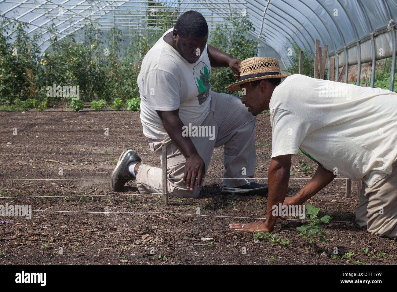 Studenten in städtische Landwirtschaft Trainingsprogramm ...