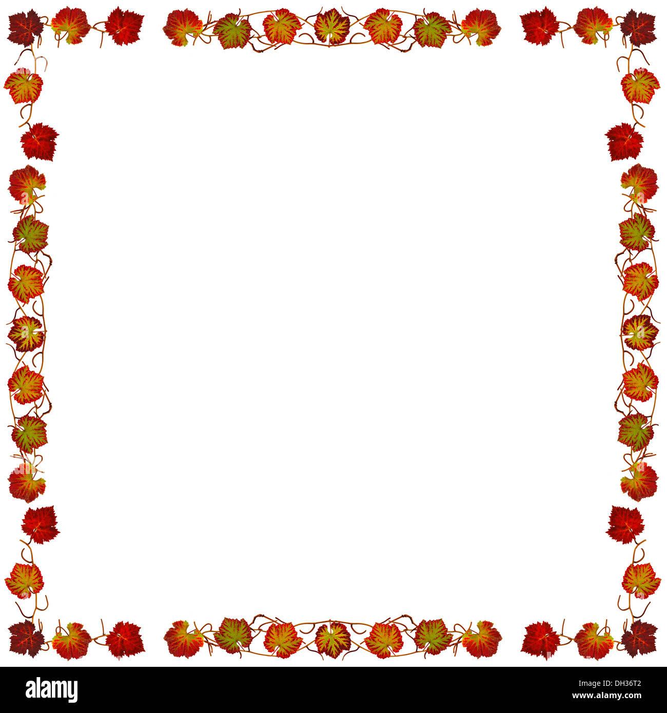 Rahmen mit bunten Blätter der Reben Stockfoto, Bild: 62151490 - Alamy
