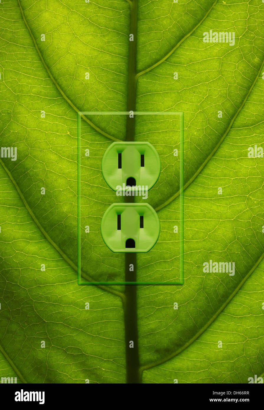 Nahaufnahme eines Blattes Grünpflanze mit grünen farbigen Steckdosen hinzugefügt. Stockbild