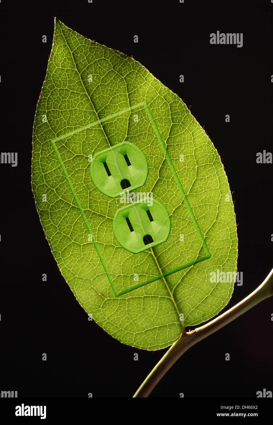 Eine grüne Pflanze Blatt auf einem Zweig mit grünen farbigen Steckdosen hinzugefügt. Schwarzem Hintergrund Stockbild