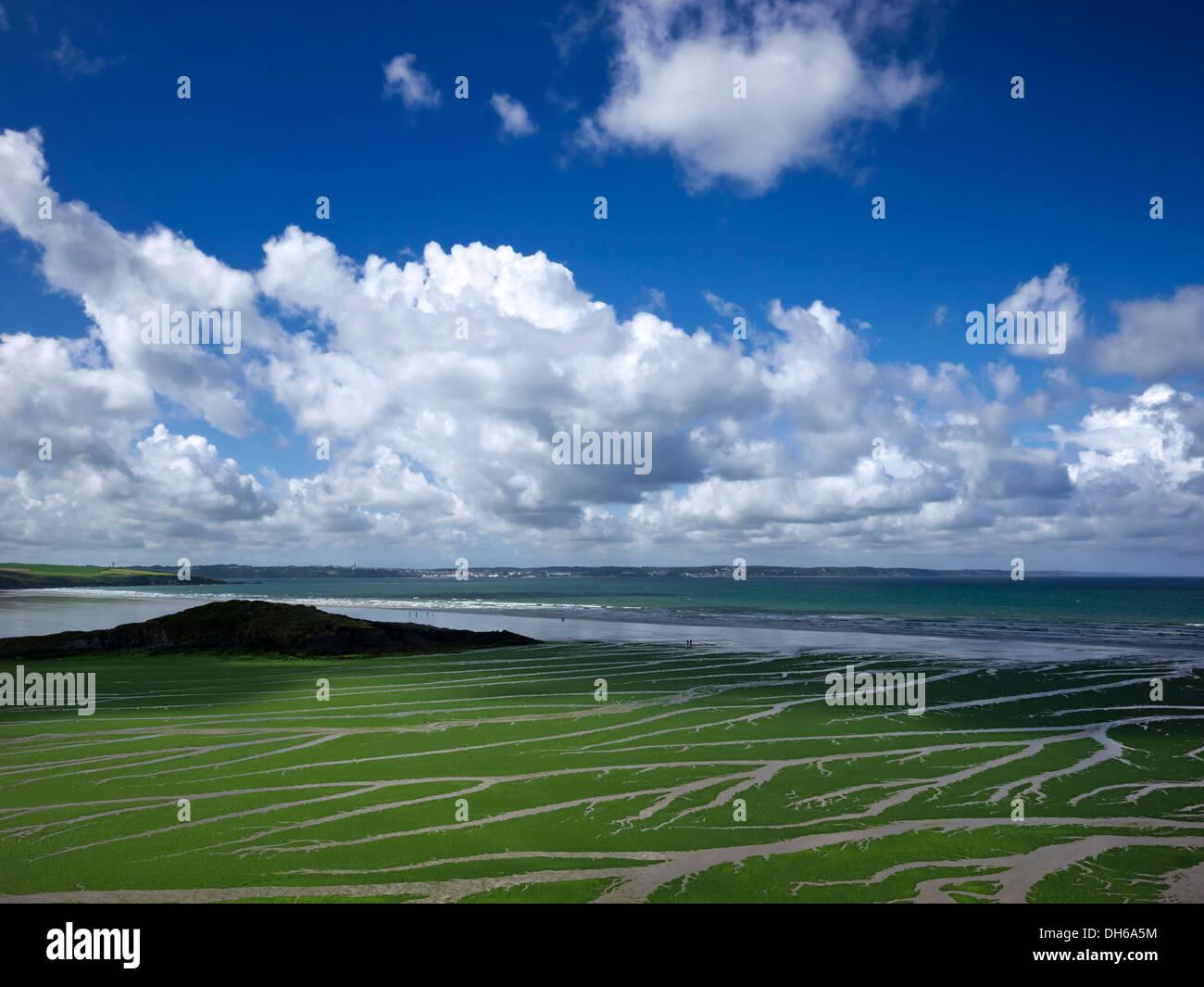 Meersalat (ulva armoricana), Algen in der Bucht von Douarnenez, Finistère, Bretagne, Frankreich, Europa, publicground Stockfoto