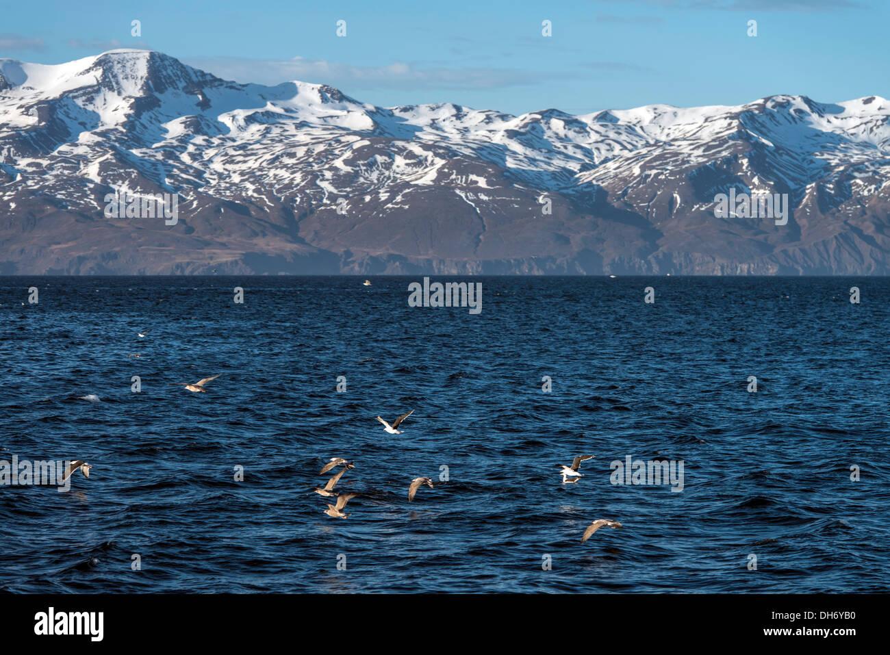 Landschaften Husavik Nordisland Europa Stockbild