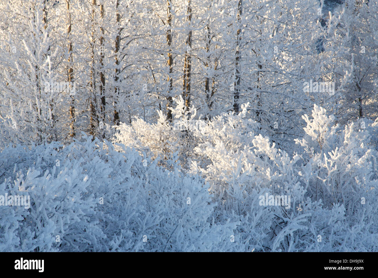 Winter im Chugach National Forest, Alaska. Stockbild