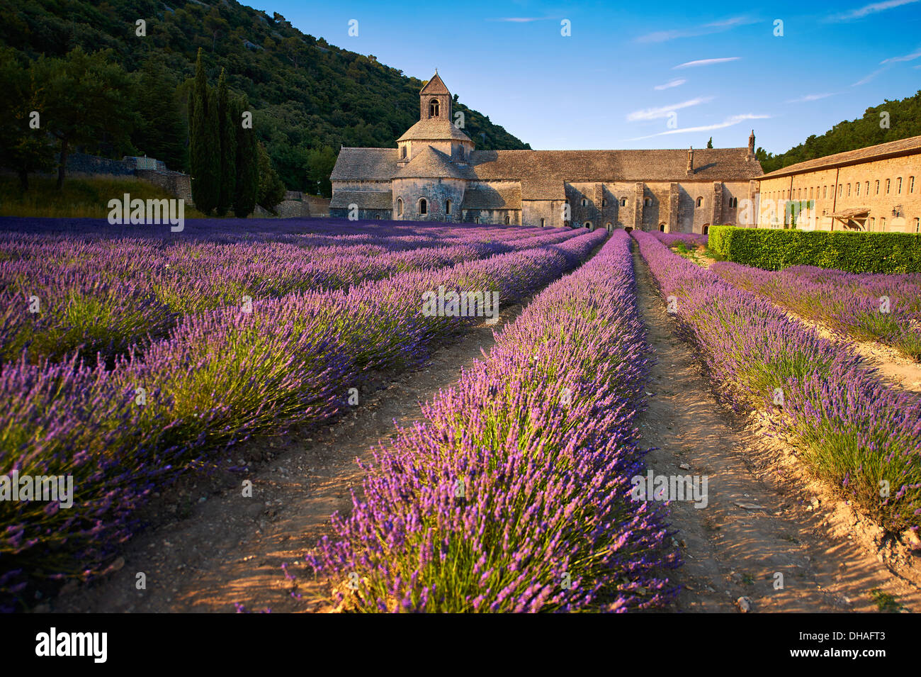 Die 12. Jahrhundert Romanesque Zisterzienser Abtei Notre-Dame von Senanque, in blühenden Lavendel Felder der Provence. Stockbild