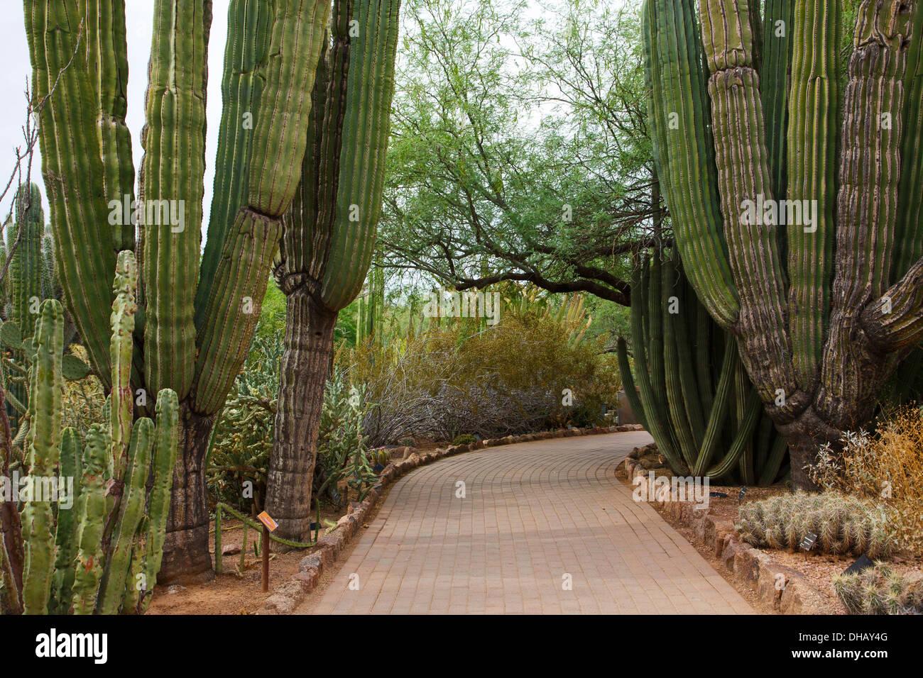 Desert Botanical Garden, Phoenix, Arizona. Stockbild