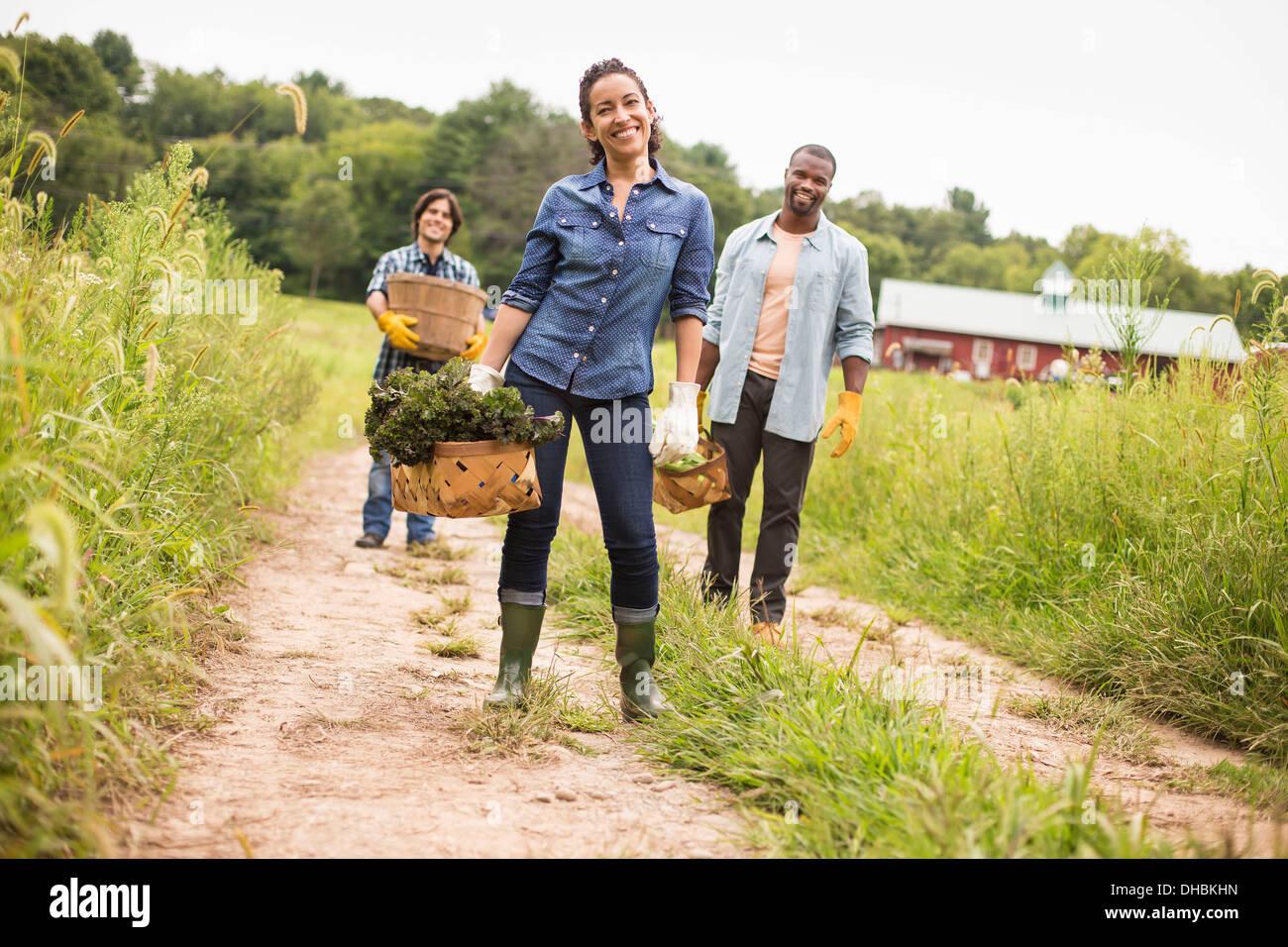 Drei Mitarbeiter auf einem Bio-Bauernhof. Fuß entlang eines Pfades tragen Körbe voll mit Gemüse. Stockbild